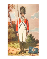 Plate ToL No.025 Grenadier Drill Order Coldstream Guards 1792